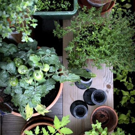 Herbs and tomatoes