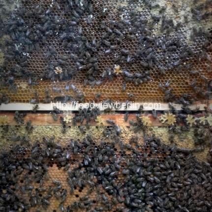 Bees at BLO