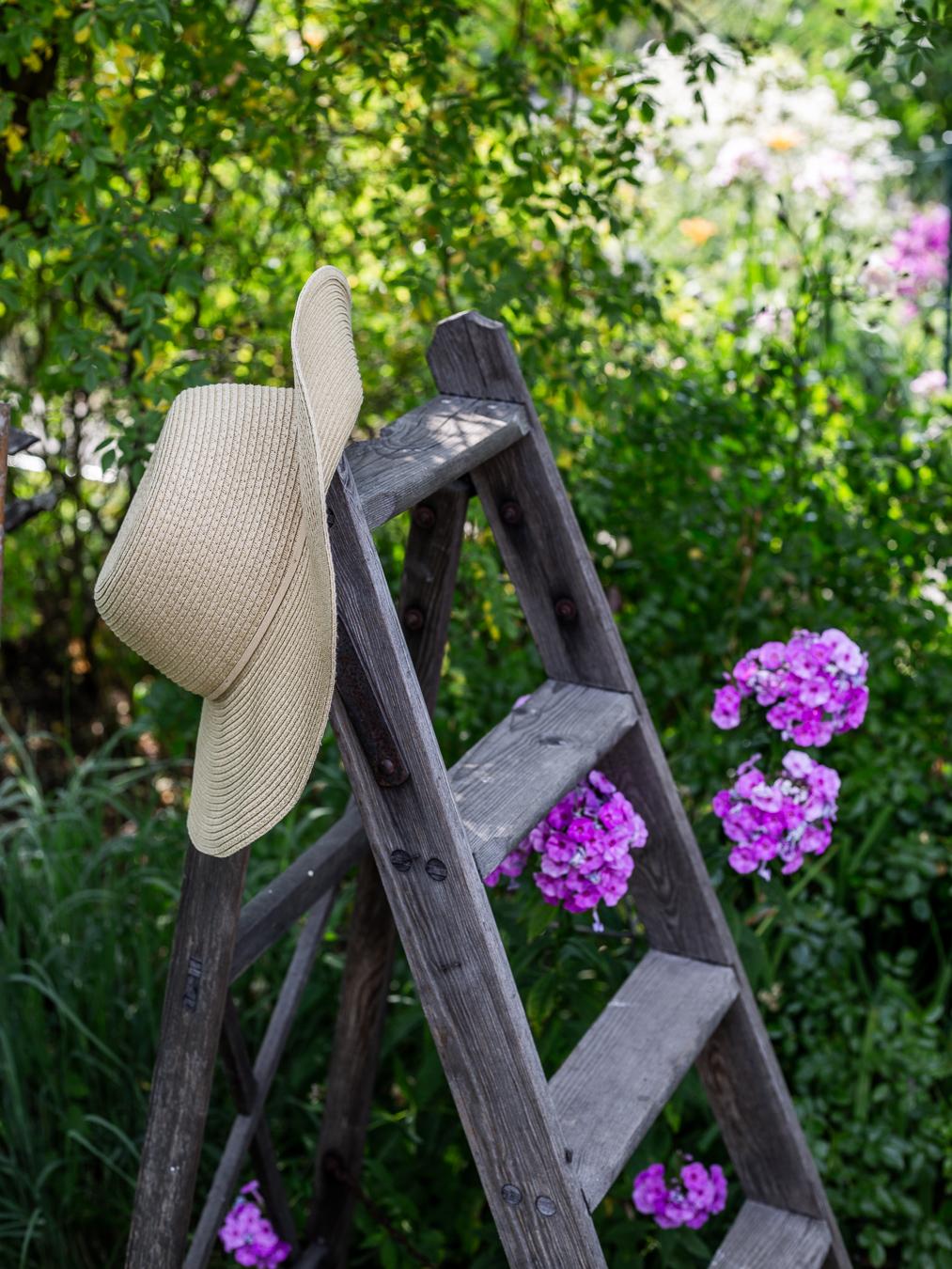 summer, garden, ladder