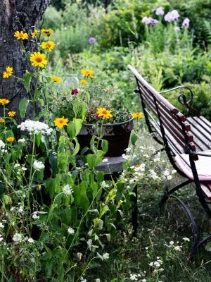 summer, garden, bench
