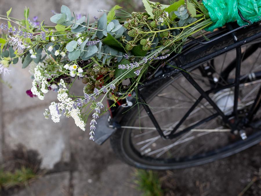 summer, garden, bicycle, flowers