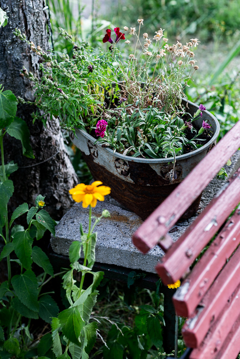 summer, garden, flowers, bench