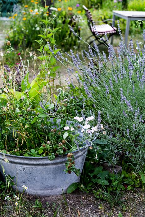 summer, garden, flowers, bench