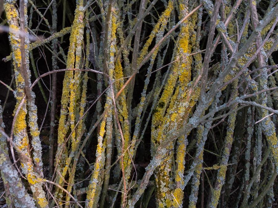 baeume, trees, moos, zweige, twigs, nature, moss, wald, teufelsberg, berlin