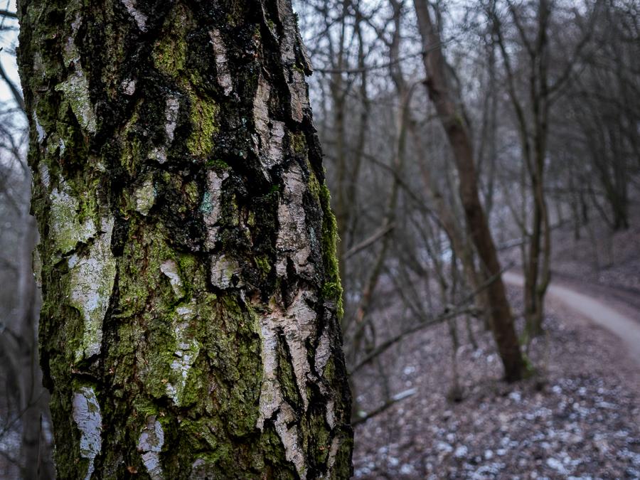 baeume, trees, moos, moss, wald, teufelsberg, berlin